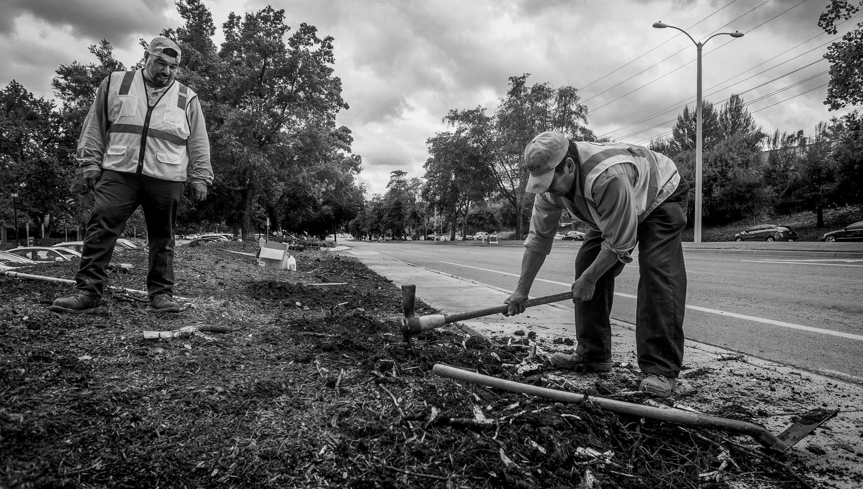 IMPROVEMENT—American Heritage Landscape workers dig in at the Lakeview Corporate Center in Westlake.
