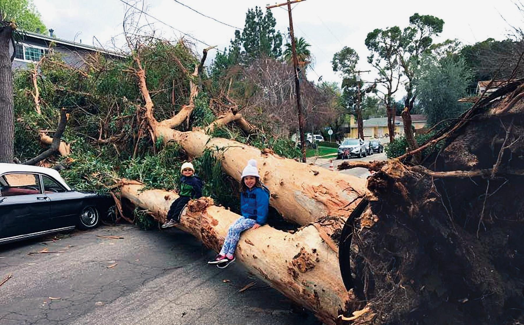 WET 'N WILD—In the photo at top, courtesy of Calabasas High School principal C.J. Foss, a large tree falls in Woodland Hills. Above and below, the storm wreaks havoc on local streets.